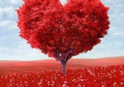 Акция ко дню влюбленных